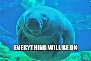 Calming manatee is a messenger from the gods. Source.
